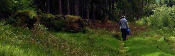 Glentrool-trails_