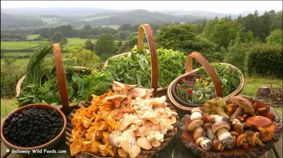 Galloway Wild Foods